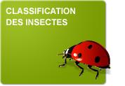 Classification des insectes (Théorie et Exercices)