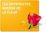 Les différentes parties de la fleur (Infos & exercices)