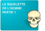 Le squelette de l'homme: Du nom au schéma (Exercices)