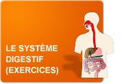 Le système digestif (Exercices)
