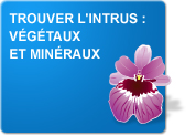 Trouver l'intrus : Végétaux et minéraux (Exercices)