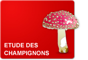 Etude des champignons (Leçon)