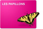 Les papillons (Leçon)