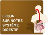 Leçon sur notre système digestif (Leçon)