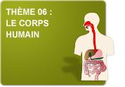Thème 06 : Le corps humain (Exercices)