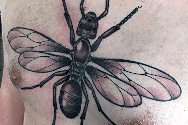 Queen ant tattoo by Nina